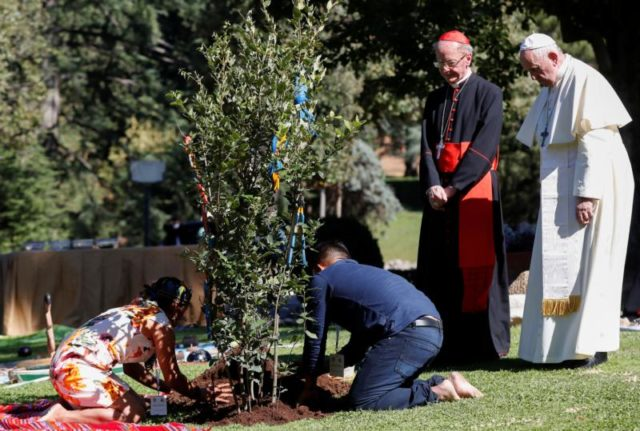 Pope Francis Assisi Tree